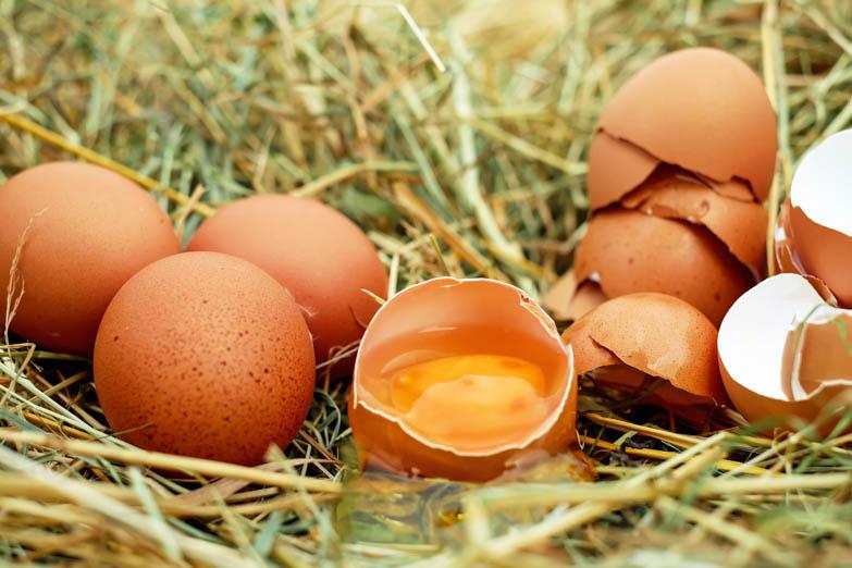 Eieren en alles wat je daarover wilt weten, deel I - Handig artikel met allerhande informatie over eieren.