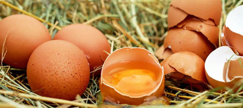 Eieren en alles wat je daarover wilt weten, deel I