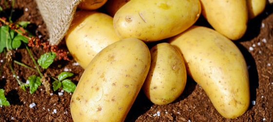 Aardappels en alles wat je daarover wilt weten