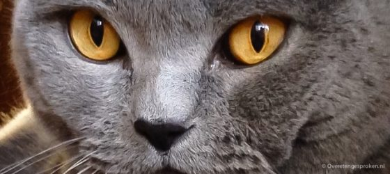 Tommy of Golden Eyes