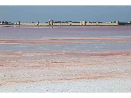 La Baleine zeezout - Frans zeezout uit de Camargue. In dit artikel vertel ik over het bijzondere natuurgebied waar het vandaan komt en hoe het wordt gewonnen.